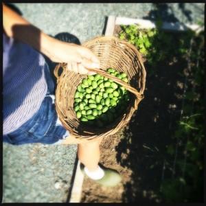 Baker Creek Seeds