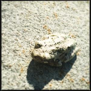 Frog in hiding.